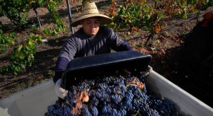 Uncorking San Diego's wine potential